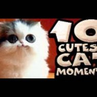 Os 10 Gatos Mais Fofos do Youtube