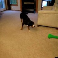 Cachorro vs Vuvuzela