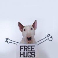 Instabull: o Instagram de um Bull Terrier