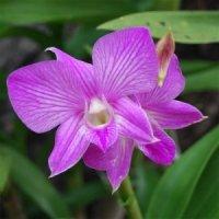 A Maior Coleção de Micro-Orquídeas